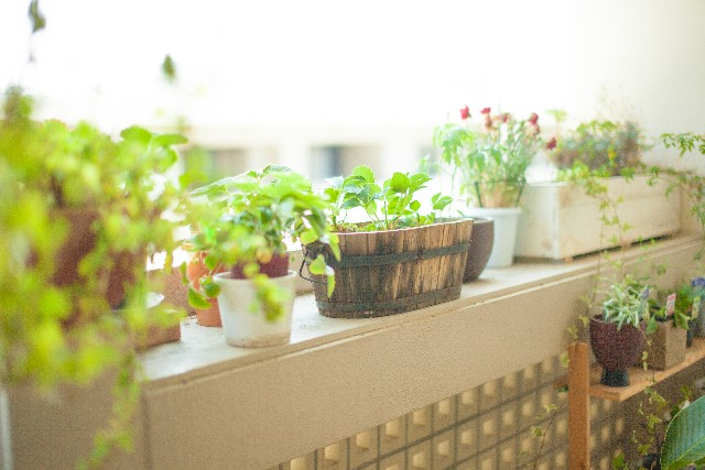 玄関に彩りを!初心者でも育てやすい観葉植物おすすめ5選