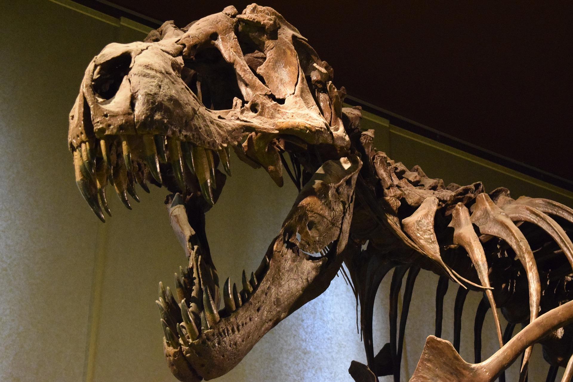恐竜展に行ったら必ずチェックしたい 巨大な肉食恐竜ベスト3