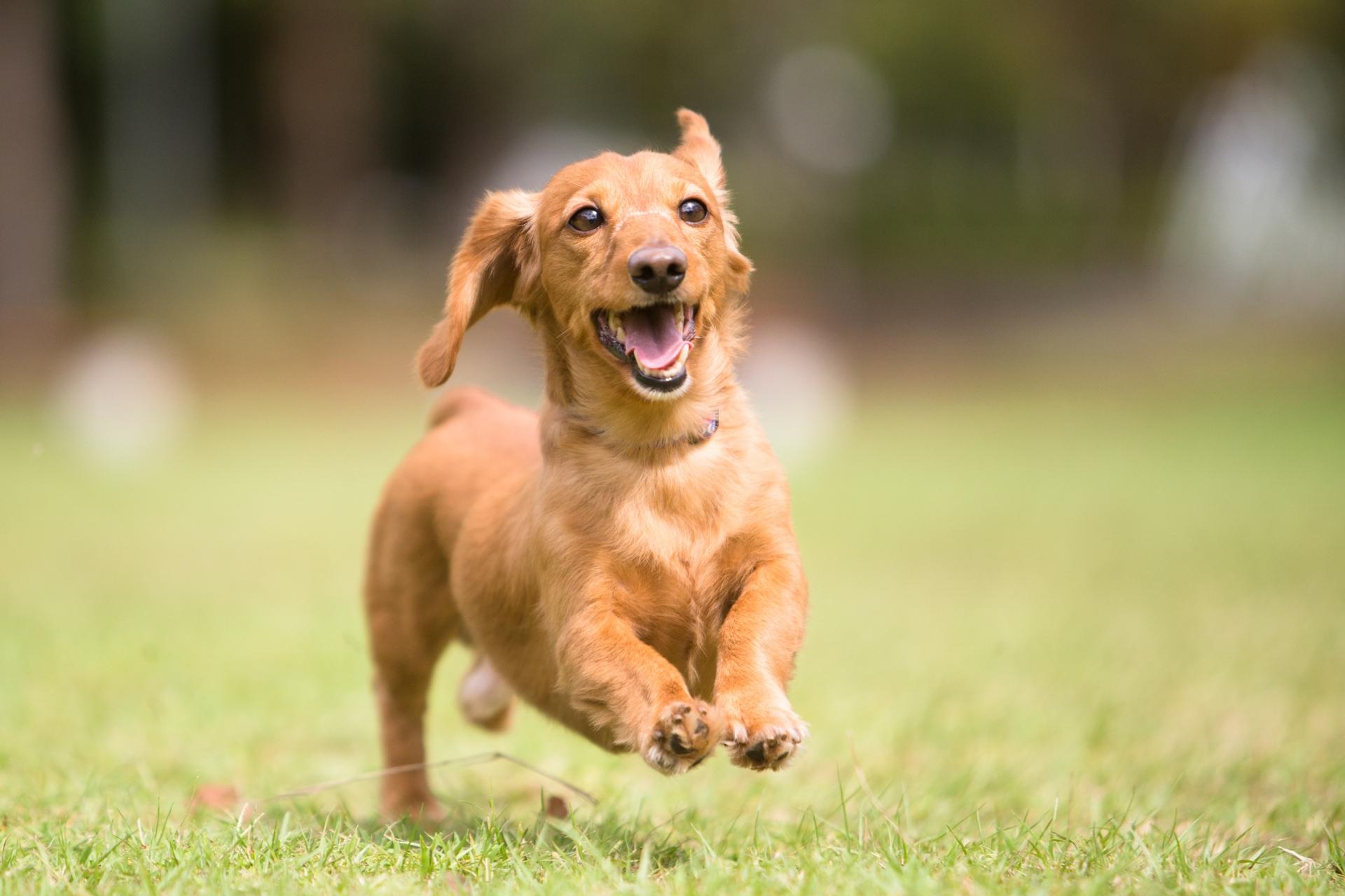 こらっ!愛犬の悪い癖を直す方法